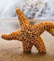 The Starfish Story: Make a Difference!